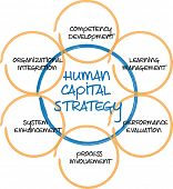 Human capital business diagram management strategy whiteboard sketch  illustration