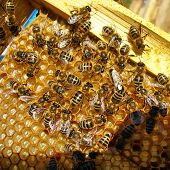 picture of honey bee hive  - close - JPG