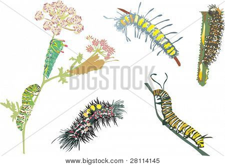 illustration with caterpillar collection isolated on white background