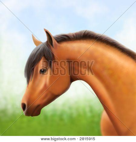Bay Arabian Show Horse