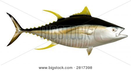 Tuna-Yellowfin