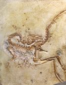 picture of dinosaur skeleton  - exploration fossil embedded in stone Rock - JPG