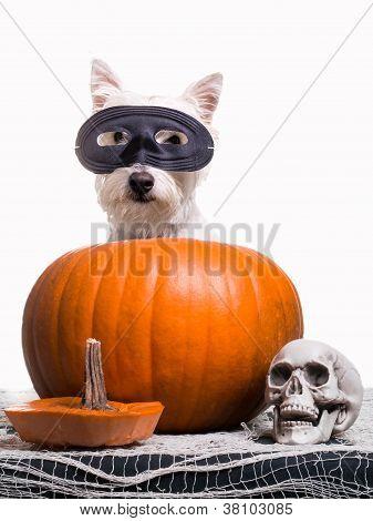 Cão de Halloween