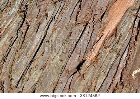 Tree Bark Details