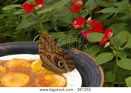 Butterfly_lunchtime_kaf