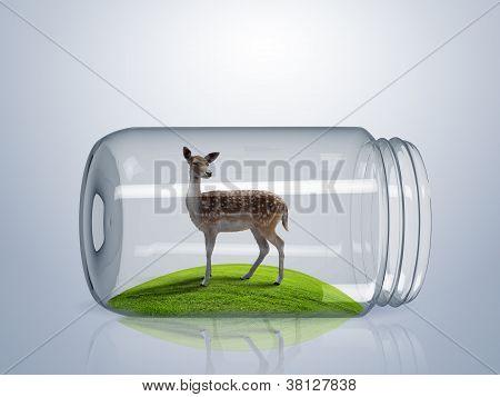 Wild deer inside glass jar