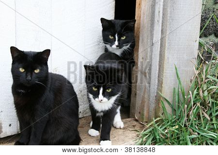 Family of cats in the doorway