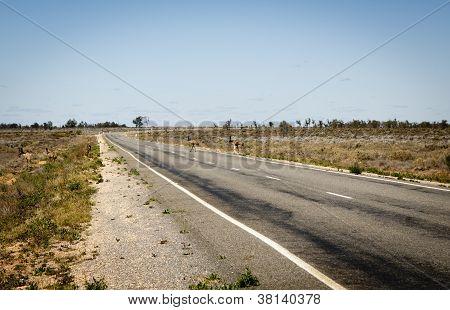 Emu Crossing Road