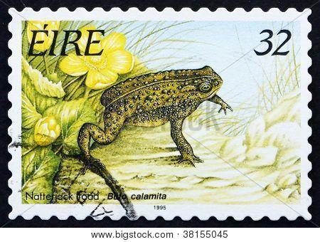 Postage stamp Ireland 1995 Natterjack Toad, Frog