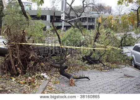 Tree Falls On Car