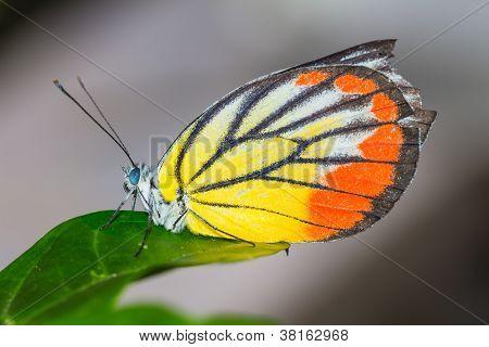 Cerca de mariposa