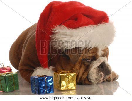 Bulldog Scrooge