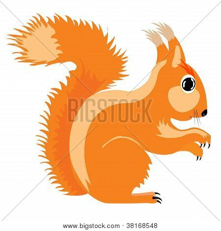 Illustration Of The Squirrel