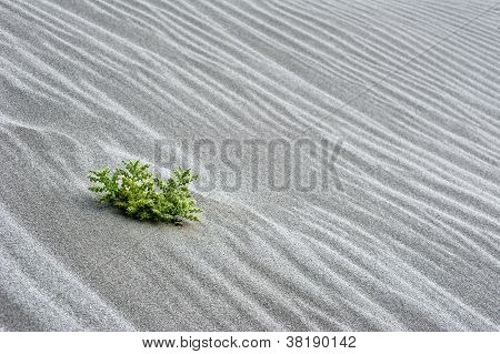 Abstract Texture Of Sand Dune In Desert With Growing Cactus Flower