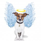 stock photo of halo  - angel dog feather wings aura nimbus looking - JPG