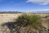foto of century plant  - High altitude plain with grass and century plants nearby - JPG