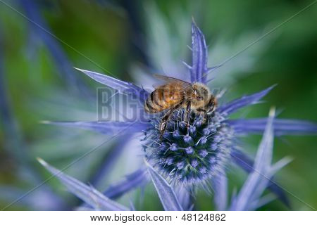Close-up of bee feeding on purple flower