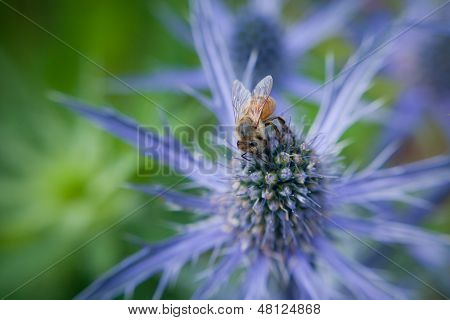Bee perched on purple cone flower