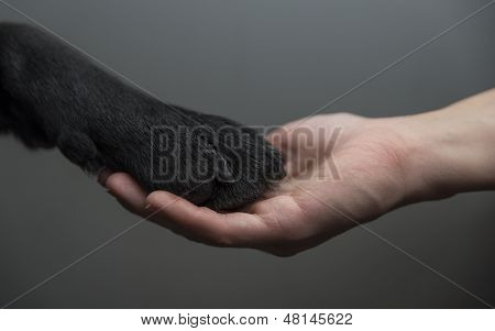 A dog and a human holding hands