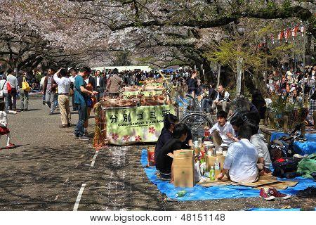 Sakura em Tóquio