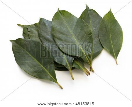 daun salam, indonesian bay leaf