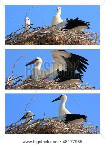 Stork family ,collage