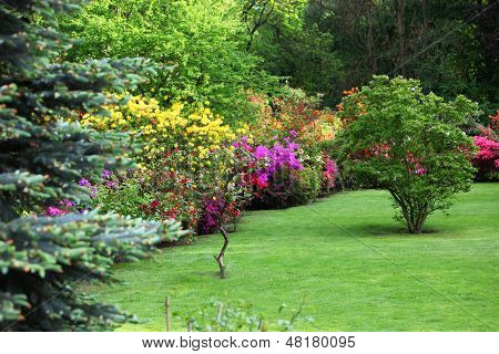 Colourful Flowering Shrubs In A Spring Garden