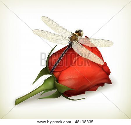 Dragonfly and rose vector