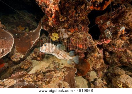 Ocean, Coral, Sun And Porcupinefish