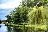 picture of weeping  - A weeping a willow stands on the banks of Verona Lake in New Jersey. ** Note: Slight grain effect, best at smaller sizes - JPG