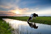 pic of pasture  - cows grazing on pasture and river at sunset - JPG