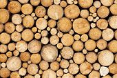 pic of crude  - Stacked wood pine timber for construction buildings Background - JPG