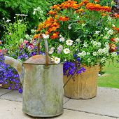 pic of planters  - A beautiful display of summer flowers in the garden - JPG
