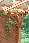 image of pergola  - Pergola with lattice screen and hanging vines - JPG