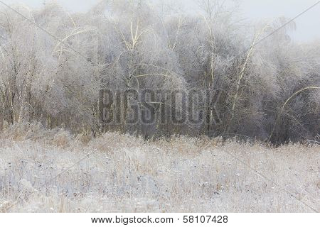 Generic Winter Landscape