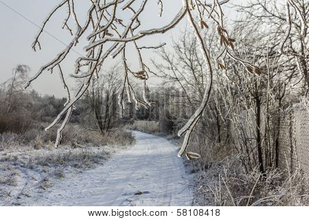 Frozen Tree Branches Overlooking Winter Landscape With Snow Covered Road In The Middle