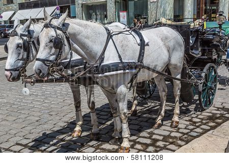 Traditional Coach (fiaker) Today Traveling Tourists In Vienna, Austria