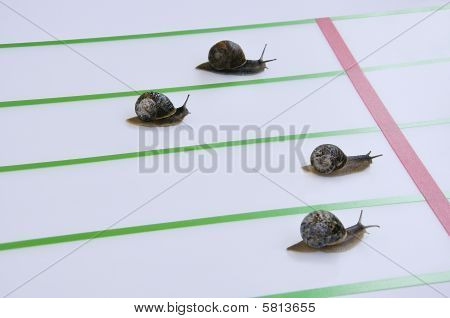 Race Of Big Escargots.