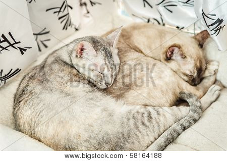 Two slepping Cats