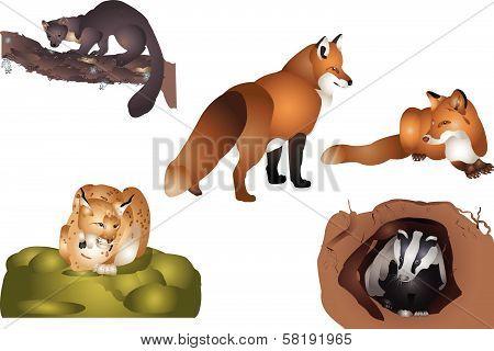 Forest mammals