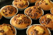 stock photo of bakeshop  - Muffins with chocolate chips on the baking tray just from the stove