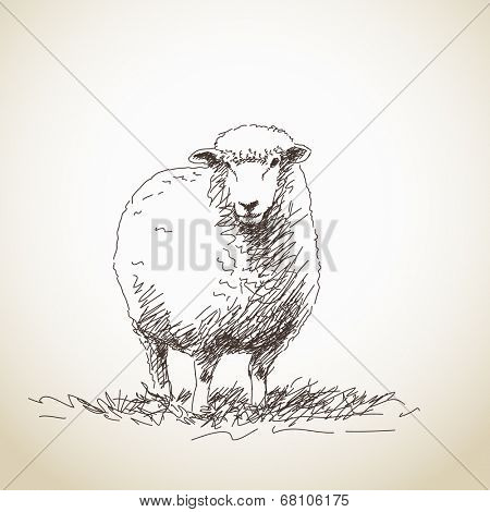 Vector Illustration Sketch of Sheep isolated