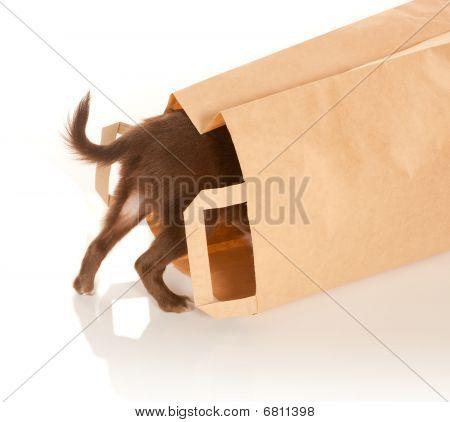 Cachorrinho em um saco de papel