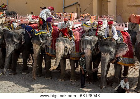 Elephant Amer