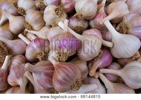 Pile of white and purple garlic at the farmers market
