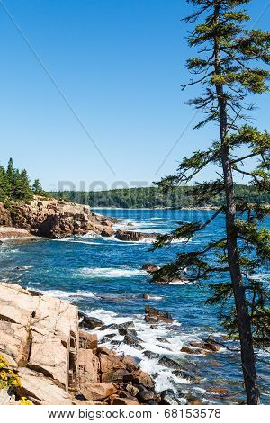 Rocky Surf Beyond Fir Tree