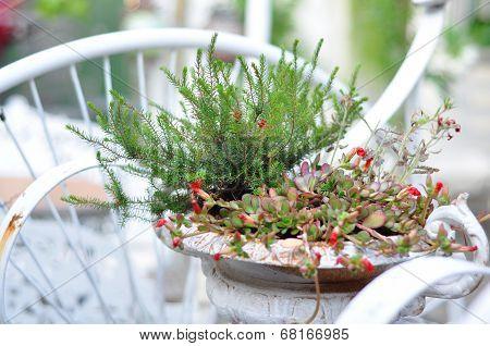 Flower Deco