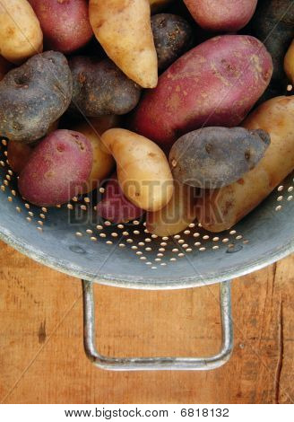 Variety Of Fingerling Potatoes In Colander