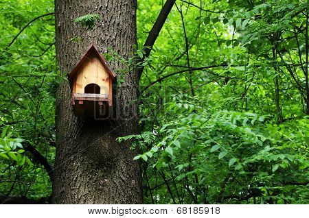 Bird house in a forest