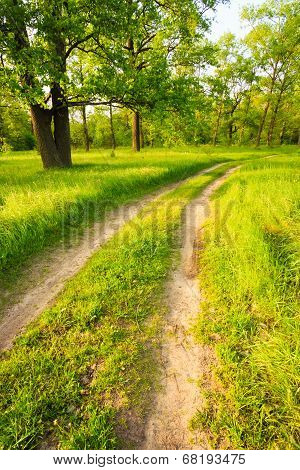 Road, Path, Way, Lane In Summer Green Forest
